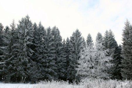 Photo pour Forêt d'hiver neigeux - image libre de droit