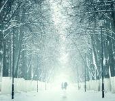 Zasněžené ulice ve winter parku