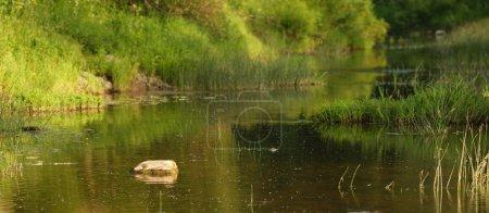 Photo pour Étang dans la forêt - image libre de droit