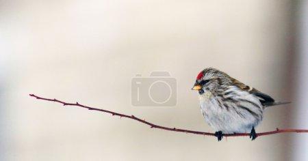Beautiful little bird on a branch