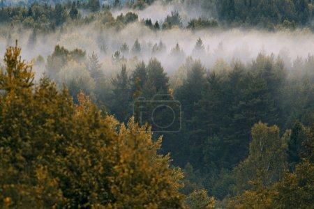 Photo pour Forêt au-dessus du brouillard - image libre de droit