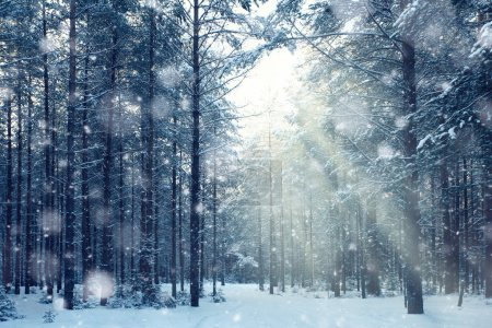 Photo for Magical winter forest. Fairy tale mystery - Royalty Free Image