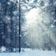 Magical winter forest. Fairy tale mystery