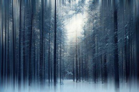 Photo pour Forêt d'hiver magique. Mystère de conte de fées - image libre de droit