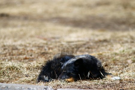 Photo for Mongrel sleeping on the ground - Royalty Free Image