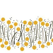 Messy billy balls craspedia beautiful yellow flowers on white background with little dots botanical seamless horizontal border