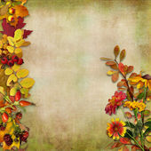 Autumn leaves, flowers and berries on a vintage background