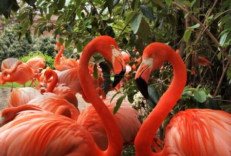 Flamingo Love Heart