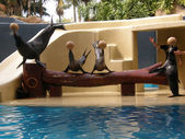 The Sea Lions show in Loro Parque