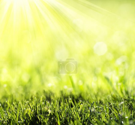 grass with green bokeh