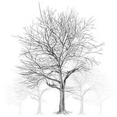 large bare tree without leaves (Sakura tree) - hand drawn