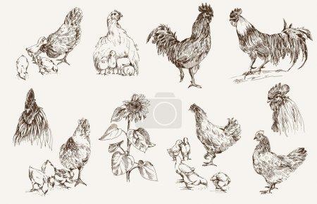 Illustration pour Élevage de poulet. jeu de croquis vectoriels - image libre de droit