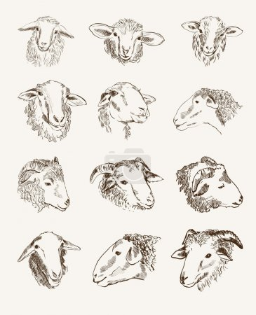 Illustration for Head of farm animals. set vector sketches - Royalty Free Image