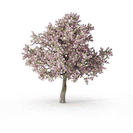 Photo pour Arbre à fleurs sur blanc - image libre de droit