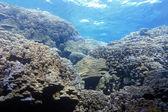"""Постер, картина, фотообои """"Коралловый риф с жестких кораллов под поверхность воды тропического моря"""""""