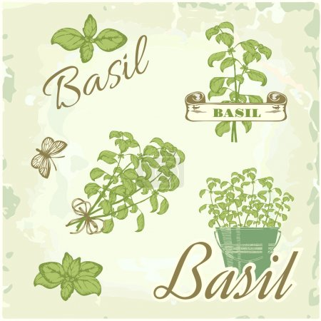 Fennel, dill, herb, plant, nature, vintage background, packaging calligraphy