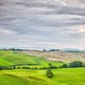 Tuscany, rural landscape. Countryside farmland, white road and trees. Orcia Valley, Tuscany, Italy.