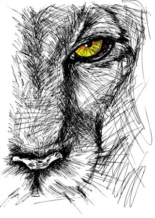 Illustration for Hand drawn Sketch of a lion looking intently at the camera. Vector illustration - Royalty Free Image