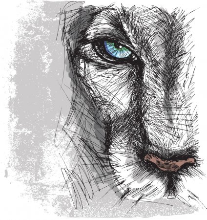 Illustration for Hand drawn Sketch of a lion looking intently at the camera - Royalty Free Image