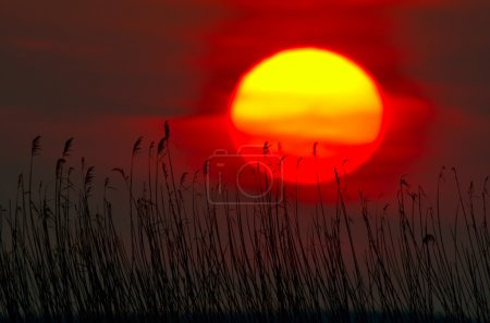 Photo for Beautiful summer sunset - Royalty Free Image