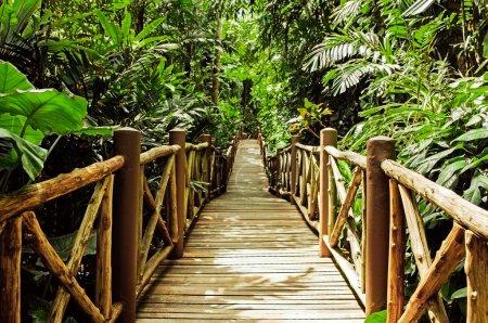 Wood bridge in the jungle