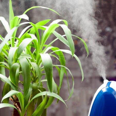 Photo pour Un humidificateur à ultrasons perd l'humidité à la plante - image libre de droit