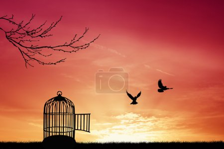 Photo for Bird cage silhouette - Royalty Free Image