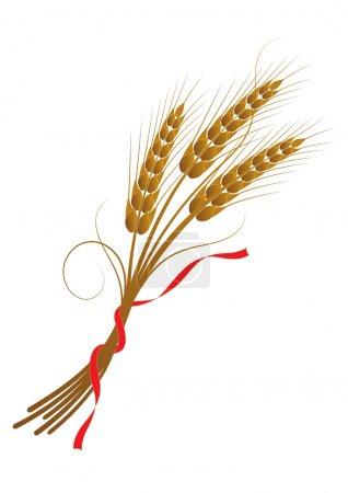 Illustration pour Illustration vectorielle du blé noué avec un ruban - image libre de droit