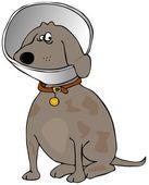 Pes s hlavou kužel