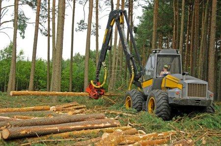Photo pour Industrie du bois en Pologne - image libre de droit
