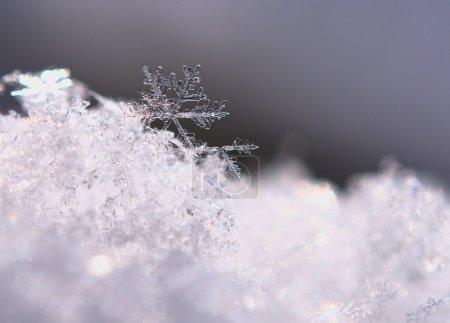 Foto de Copo de nieve se muestra cerrar. claramente visible, su forma y estructura. - Imagen libre de derechos