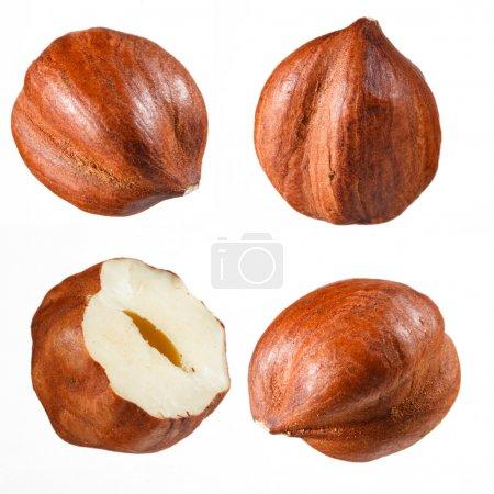 Hazelnut collection
