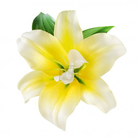 Vanilla Flower. With clipping path