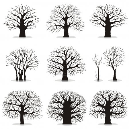 Illustration for Collection of silhouettes of different trees - Royalty Free Image