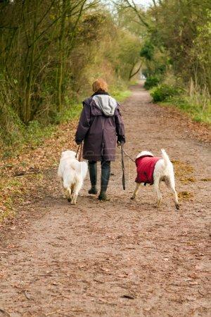 Photo pour Femme d'âge moyen promenades ses chiens dans la campagne - image libre de droit