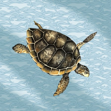 watercolor turtle in the sea