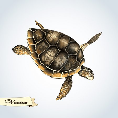 Vector watercolor turtle.