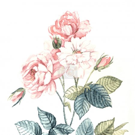 Illustration for Vector watercolor gentle roses. Illustration for greeting cards, invitations, and other printing and web projects. - Royalty Free Image
