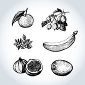 Set of hand-made graphics fruit