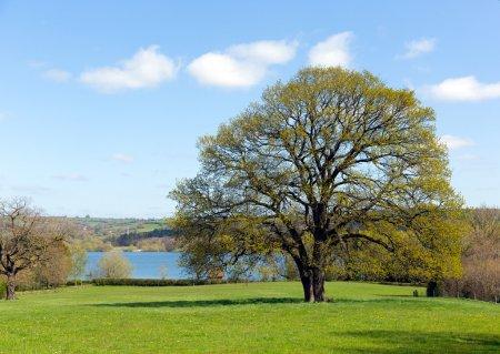 Photo pour Le lac Blagdon Somerset, dans la vallée de Chew, au bord des collines Mendip, au sud de Bristol, fournit de l'eau potable, mais est également utilisé pour la pêche et constitue une réserve naturelle. - image libre de droit