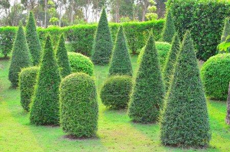 Beautiful garden in park