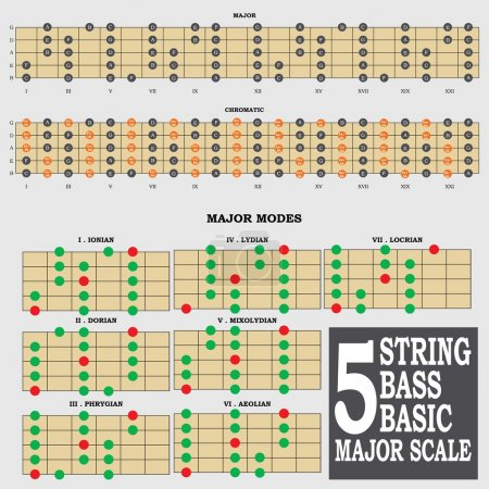 5 string bass basic major scale for bass player teacher and student