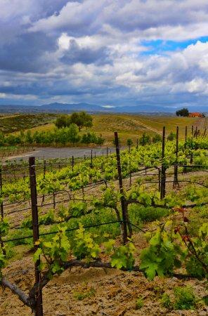 Wine vineyards in Temecula. Temecula is in North C...