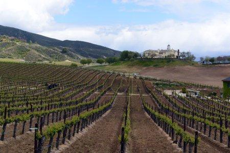 Vineyards of Temecula in North County San Diego...
