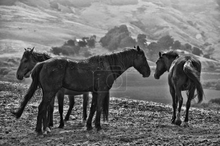Several wild horses on top of a ridge at the Retur...