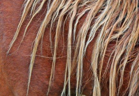 Brown mane background