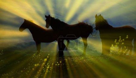 Photo pour Un cheval sauvage américain a été sauvé, et se tient silhouette par un lever de soleil matinal à Lompoc, Californie - image libre de droit