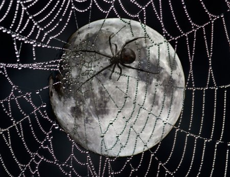 Spider web over moon