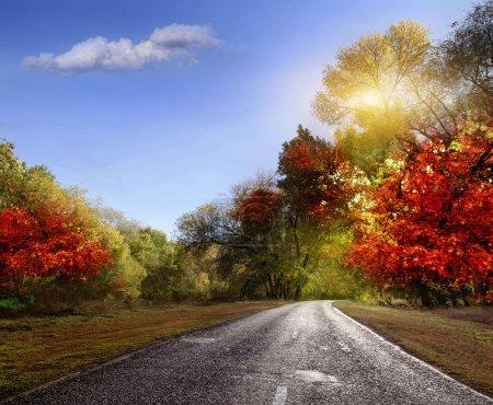 Photo pour Route pavée dans la forêt d'automne - image libre de droit