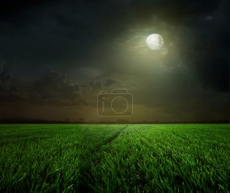 Photo for Young wheat field at night with the moonlight - Royalty Free Image